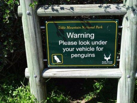 penguin-warning